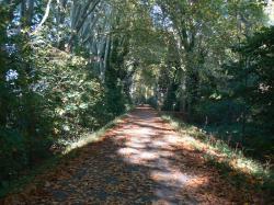 le_chemin_en_automne_-_copie.JPG